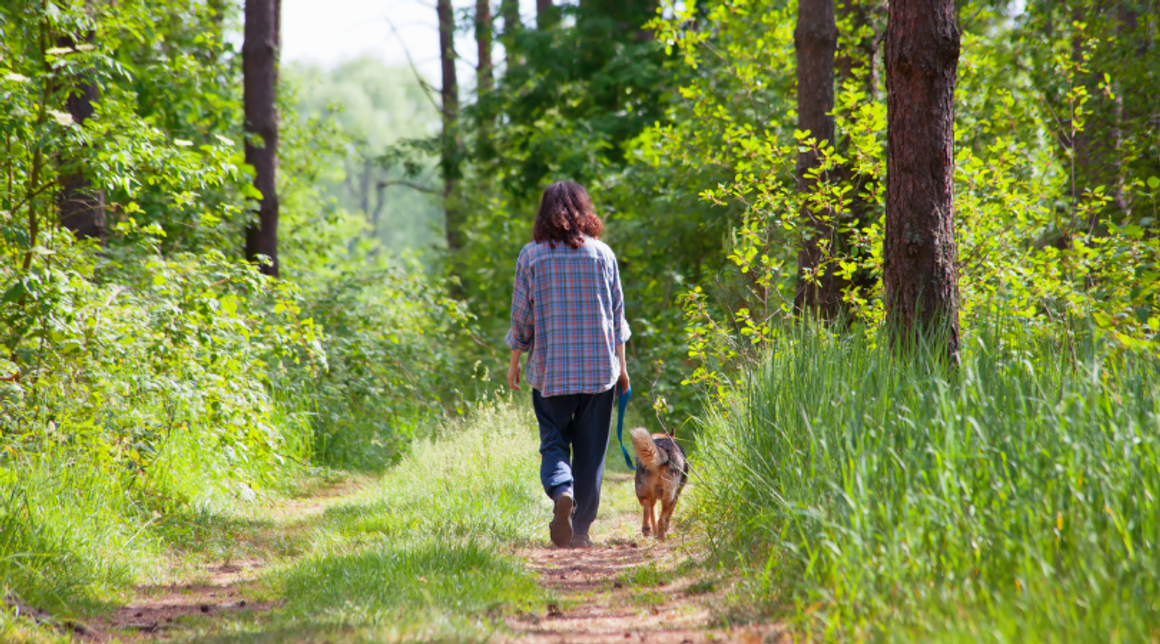 Natural Tick Prevention For Dogs