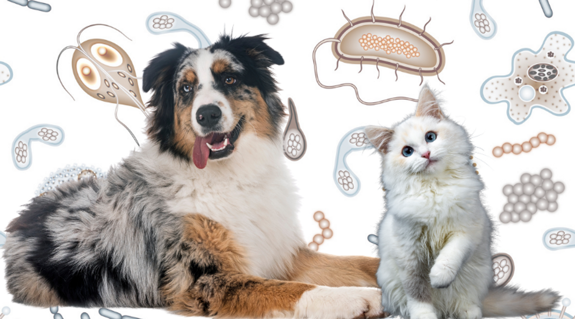 Will Colloidal Silver Affect My Pet's Gut Bacteria?