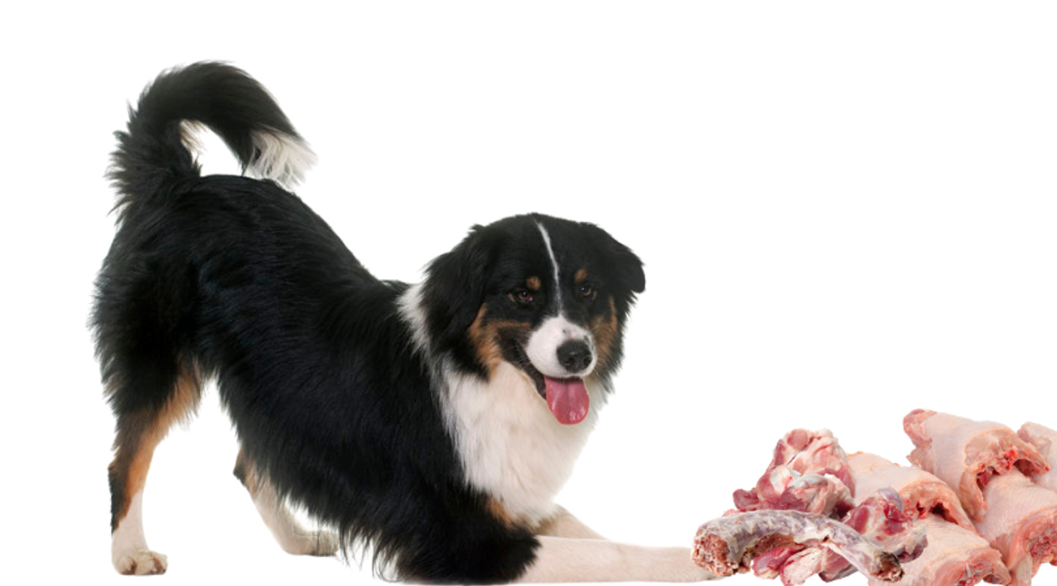 What Is The Raw Food Diet For Dogs?