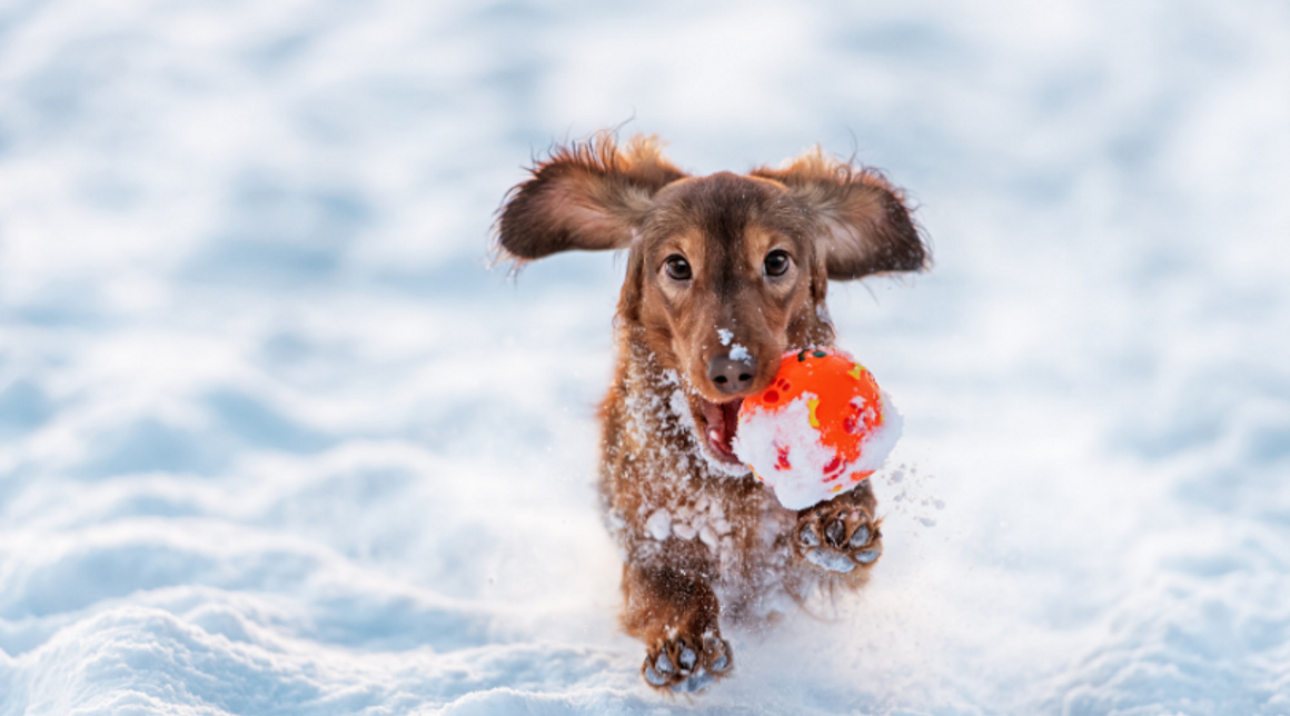 Things to Do With Your Dogs In Winter