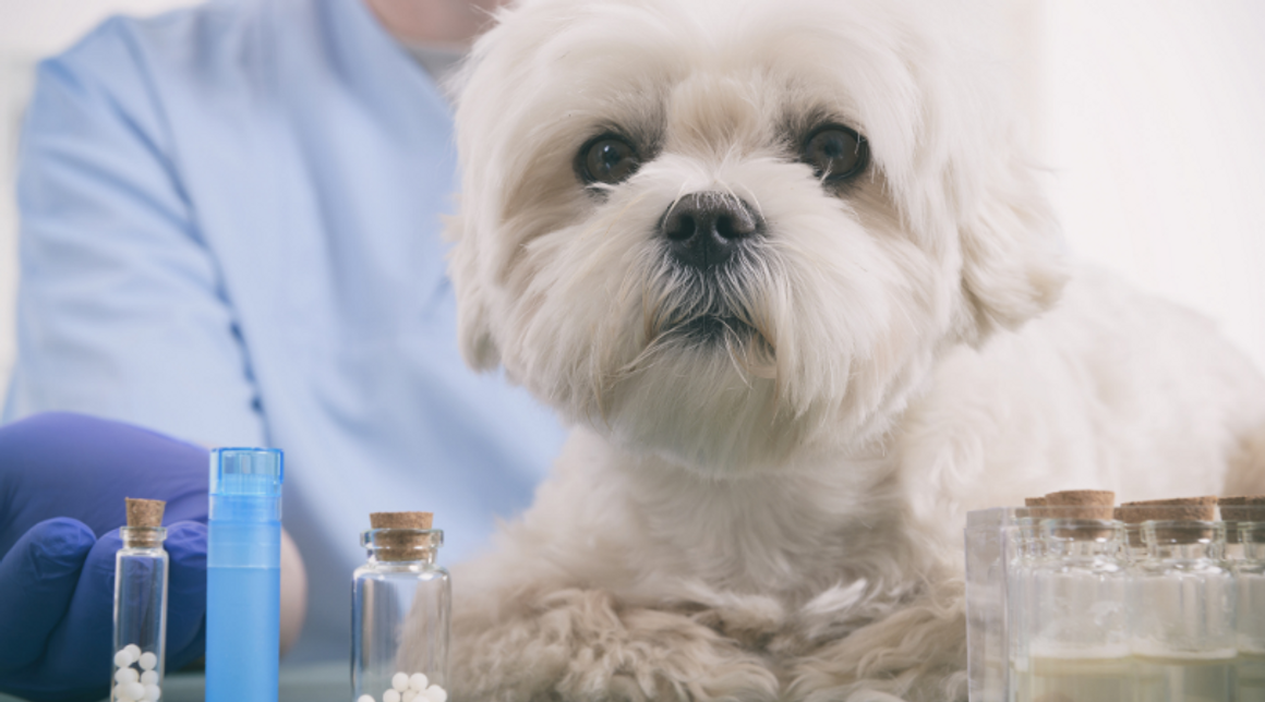 Top 10 Homeopathic Remedies for Pets