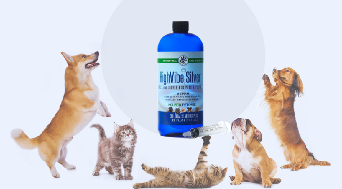 Using Colloidal Silver for Pets