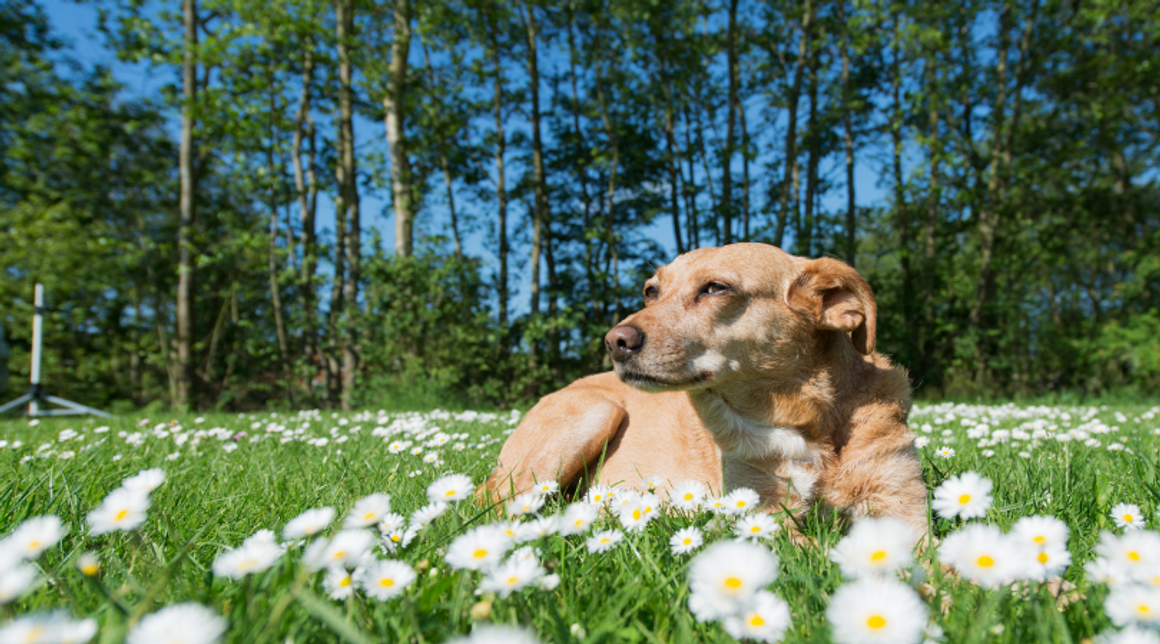 Why Switch To Holistic Pet Care?