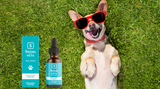 ​Natural Pain Relief For Dogs - CBD