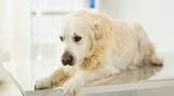 Natural Cancer Treatment For Dogs - Colloidal Silver