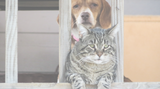Caring for Senior Dogs and Cats, Holistically