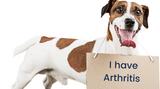 DMSO Uses in Dogs