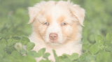 Holistic Pet Care For Dogs - Exploring All Natural Puppy Care