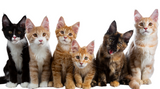 Holistic Remedies For Cats