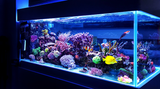 How Colloidal Silver Works in a Fish Tank