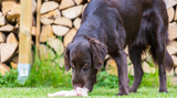Raw Diet For Dogs - When Is It Safe?