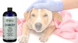 Parvovirus Treatment In Puppies
