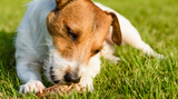 The Benefits of Raw Feeding your Dog