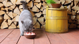 What is a Healthy Cat Diet?