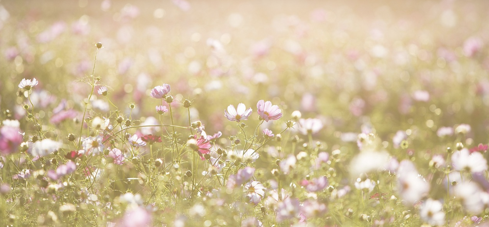 little-flowers.png