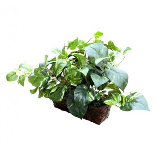Fake Plant Hidden Camera w/ Battery, DVR & WiFi Remote View