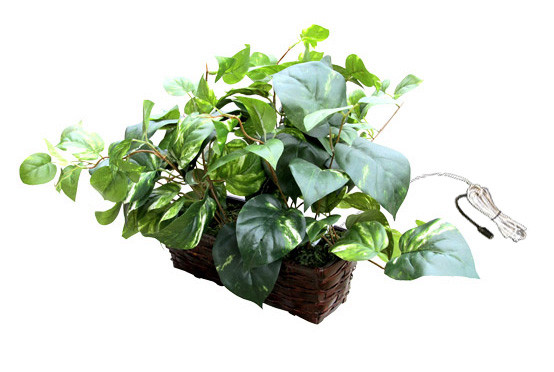 Fake Plant Hidden Camera w/ DVR, WiFi Remote Viewing & 20 Foot Night Vision Stunning 1080p HD Video Streaming Live On PC or Any Smart DeviceAll the video being recorded is in crisp & clear quality color video directly onto your PC computer using the free software in HD Video. This ensures youll be able to make out all the details of activity in the room youre recording. In addition, the camera lens shoots wide Field of View of 90 deg horizontal with a 3.8mm focal length so youll be able to see most of your room, edge to edge without missing a thing.  All the video is recorded in avi format using mpeg compression with time/date stamped files for easy saving, emailing or playback on your PC or Mac computer.Important: MAC COMPUTERS: Live viewing & recording is not Mac computer compatible. Live view works only when using the free app for iPhone or iPad.Record Weeks Of Video Onto Your PC or SD CardThe device can use 128 MB of removable memory for capturing weeks of motion activated video. Or using your computer on local network or remotely, youll never run out of recording memory. This product streams & records directly to software running on your local PC computer  (sorry, no macs). You also have the option of using this to stream video only to any mobile device. With adjustable frame rate controls, its easy to capture weeks to  months of hidden videos. This, along with motion activated recording will give you virtually unlimited video recording time depending on your hard drive size in your computer. The easy to use software will allow you to view up to 32 different cameras from different locations on a single screen. Invisible IR LEDs Capture Video In Total Darkness 20 Feet AwayUsing cutting-edge 940nm wavelength LEDs, these IRs are invisible to the naked eye with a .03 Lux @ F2.0. Some inferior night vision cameras use lower-frequency LEDs that are highly noticeable, hence giving away their location. Our 940nm LEDs are so powerful, that even in total darkness, youll clearly see exactly who is lurking in the dark. Time/Date Stamp For Quick ID