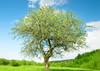 Four Seasons Tree - Postcard