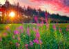Fireweed - Postcard