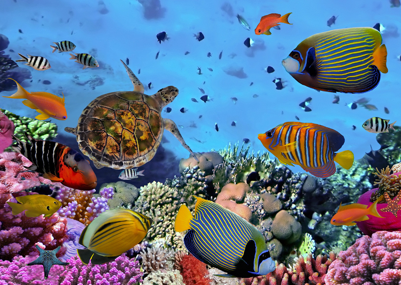 Coral reef, tropical fish and sea turtle Postcard ...