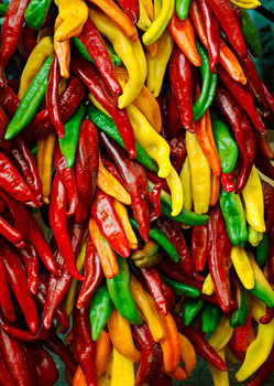 Chile Peppers Postcard