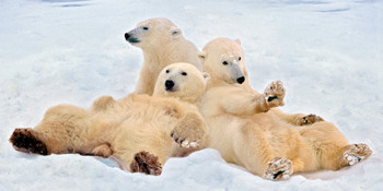 Bear Polar relax long