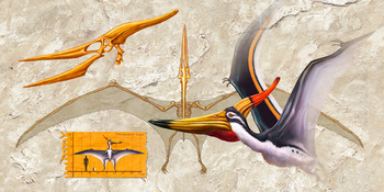 Pteranodon Anatomy Long Card