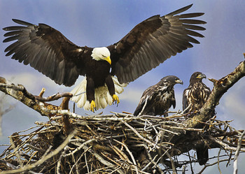 Eagle nest - Postcard