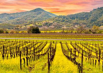 Napa Valley - Postcard