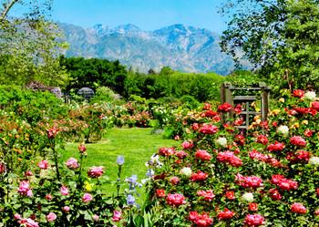 Descanso Gardens rose garden - Postcard