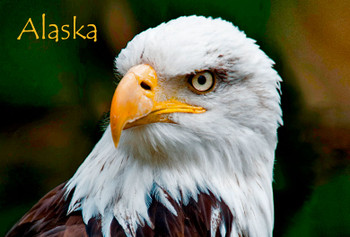 Eagle Face Magnet with name drop Alaska