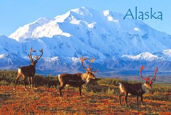 Denali Caribou Magnet Alaska name drop