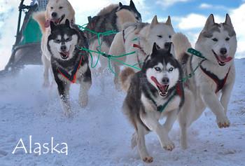 Sled dogs Magnet Alaska name drop