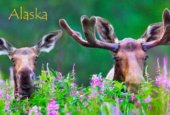 Moose in Fireweed Alaska name drop