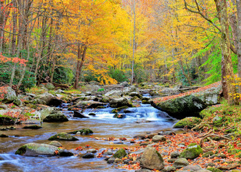 Appalachian River In Autumn - Postcard