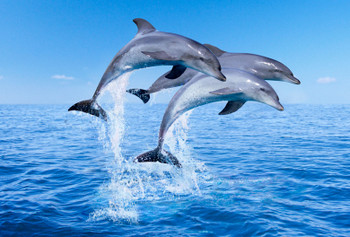 Dolphin jumping Magnet