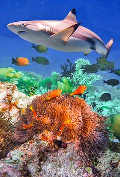 Shark & Coral - Magnet