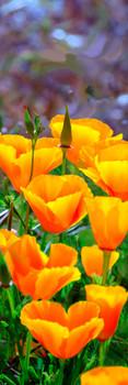 Poppies California Bookmark