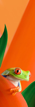 Frog, red eyed tree frog Bookmark