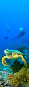 Turtle Hawksbill Bookmark