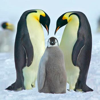 Penguin Family Maxi Card