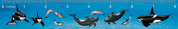 Dolphins of Many Kinds Ruler(in)