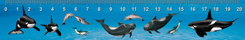 Dolphins of Many Kinds Ruler(cm)