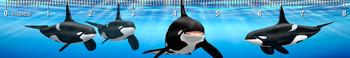 Orca Ruler(in)