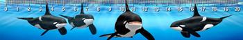 Orca Ruler(cm)