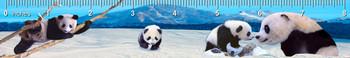 Pandas Ruler(in)