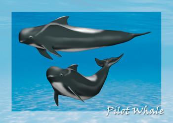 Whale Pilot Postcard