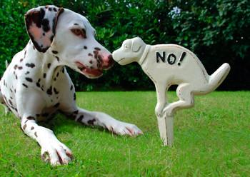 Dog, Dalmatian Postcard
