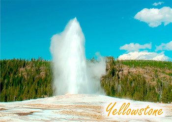 Old Faithful Yellowstone - Postcard
