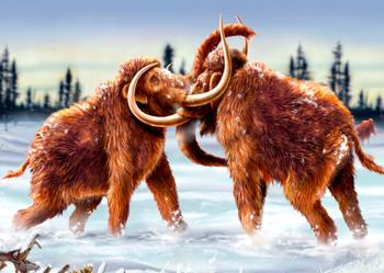 Mammoth fighting Postcard